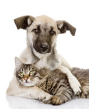 the dog hugs a cat. isolated on white background