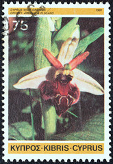 Epipactis veratrifolia (Cyprus 1981)
