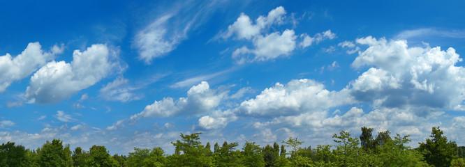 Panoramabild mit Wald und Wolkenhimmel