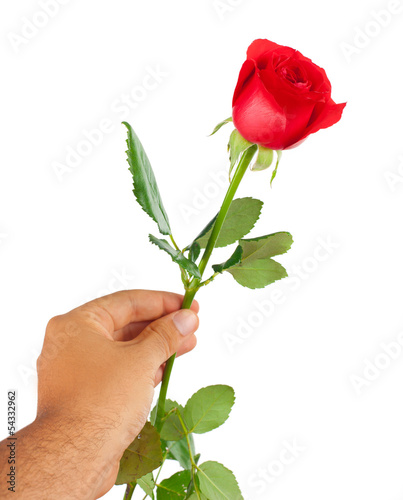 Red rose in a male hand