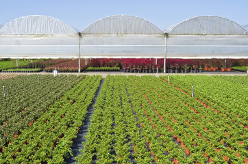 Nursery with greenhouses in Hazerswoude, The Netherlands.
