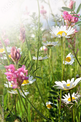Happy summer: meadow with colorful flowers