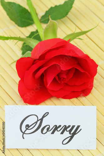 Sorry card with red rose