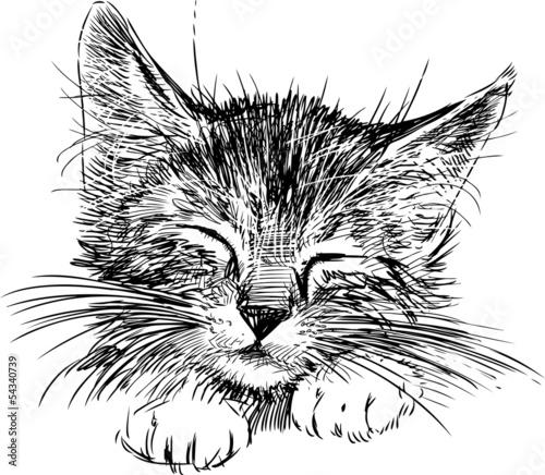 fototapeta na ścianę kot śpi