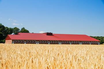 Getreidefeld mit moderner Stallanlage