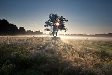 sunbeams through tree in misty morning
