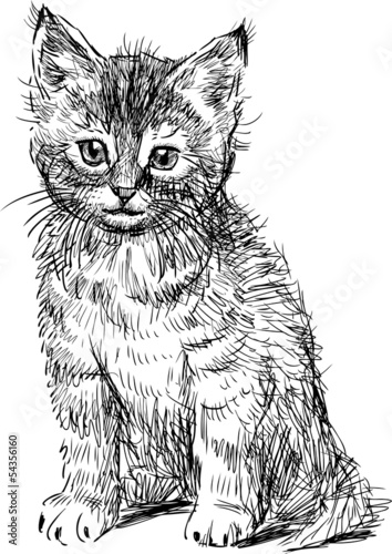 """""""u817f"""",""""u8c93""""]可爱的哺乳动物坐在宠物小猫尾巴毛皮绘图耳朵腿猫"""