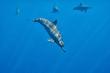 Dolphins Underwater Close encounter