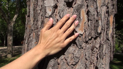 woman hand caressing tree