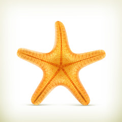 Starfish, realistic vector icons