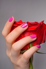 Rose in hand. Close-up of female hand holding a rose against gre