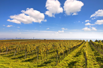 Vineyard landscape with the skyline of Vienna in the background.