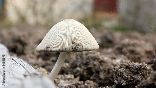 mushroom growing on the ground