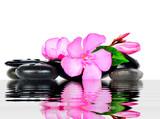 отражение цветка - 54361732