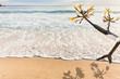 frangipanier sur plage des Seychelles