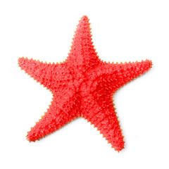The common Caribbean starfish Oreaster reticulatus