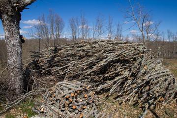 leña cortada de roble en el bosque