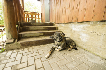 dog guarding house near stairway