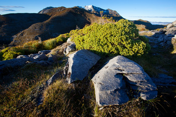 New Zealand mountain landscape