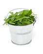 rucola in a bucket