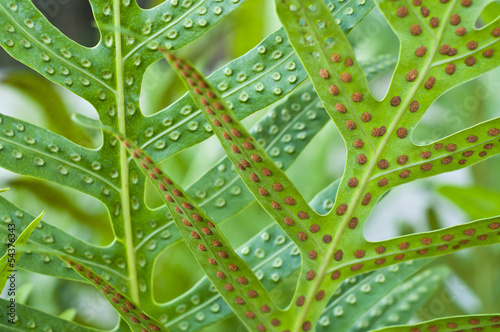 Fern leaf and spore.