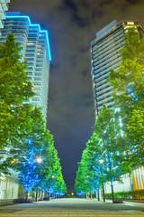高層マンションと街路樹の夜景