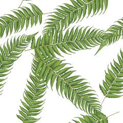 seamless  new zealand leaf background