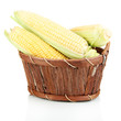 Fresh corn vegetable in basket isolated on white