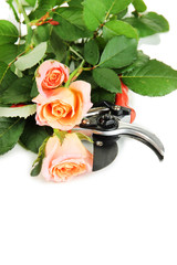 Garden secateurs and roses isolated on white