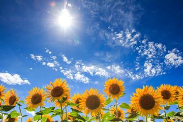 太陽とひまわり畑