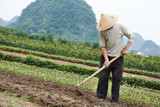 chinese peasant working in field