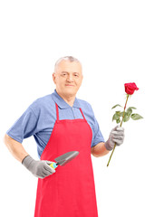 Male gardener holding a rose flower and gardening equipment