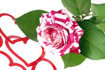 zweifarbige Rose mit Dekoherzen