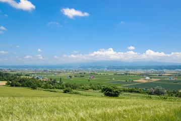 中富良野町の田園風景