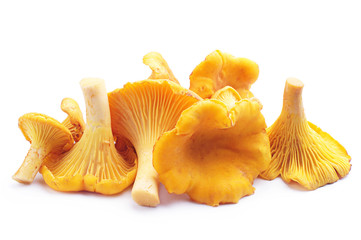 Chanterelles mushrooms