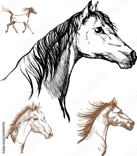 Horses, set of drawings