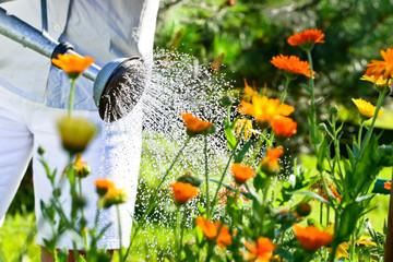 Blumen gießen
