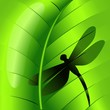 Dragonfly Shape on Green Leaf-Libellula su Foglia Verde-Vector