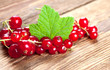Red currants with leaf on old wood