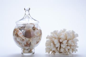 Ampolla con conchiglie e corallo