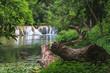 Fototapeten,national park,park,wasserfall,regenwald