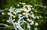 daisies and rope
