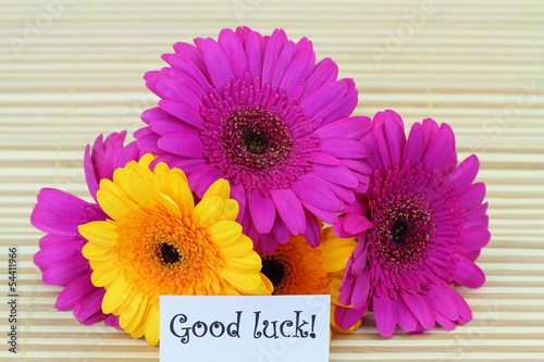 Good luck note with colorful gerbera daisies