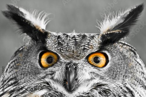 In de dag Uil Eurasian Eagle-Owl