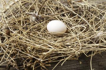 huevo en su nido