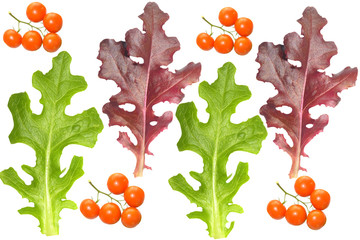 Red and green lettuce leaves and truss tomatoes collage isolated
