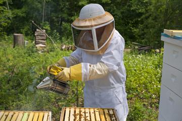 Honey Bees