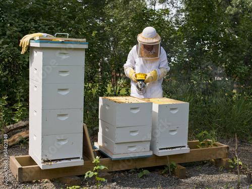 Staande foto Bee Beehives