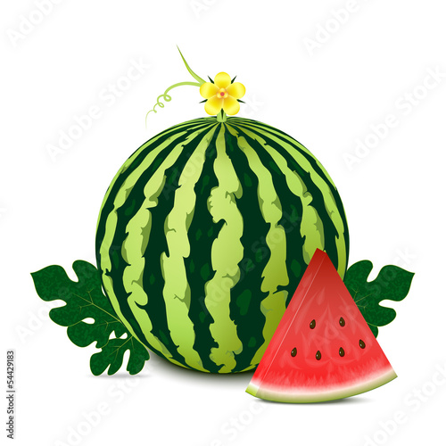 Whole watermelon with slice and leaves.Vector illustration.