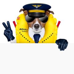 pilot dog
